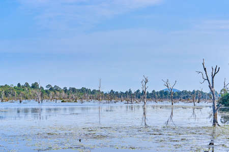 Artificial lake with bare trees around Neak Pean at Angkor in Cambodia