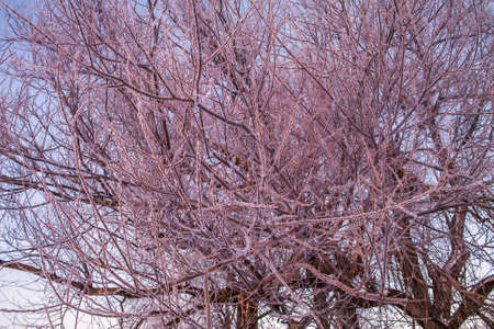 Frozen branches 스톡 콘텐츠