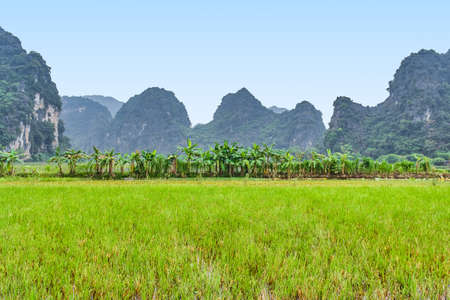 Mountains view with rice meadow in Ninh Binh, Vietnam