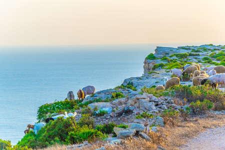 Sunset view over Ta Cenc cliffs on Gozo, Malta