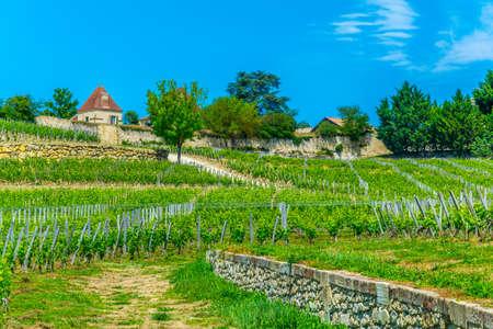 Vineyards at Saint Emilion, France