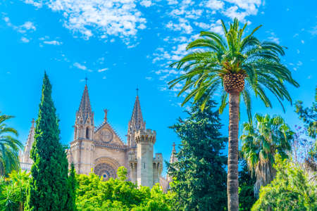 Cathedral of Palma de Mallorca with a palm, Spain 写真素材