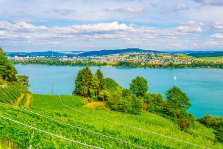 Vineyards surrounding Bielersee in Switzerland 免版税图像