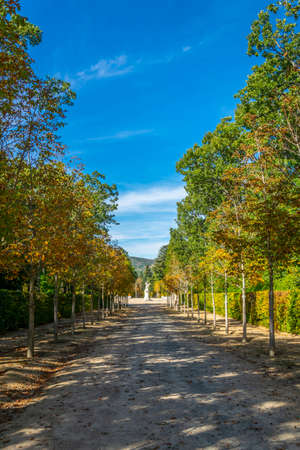 Alley in a garden of la Granja de San Ildefonso in Spain