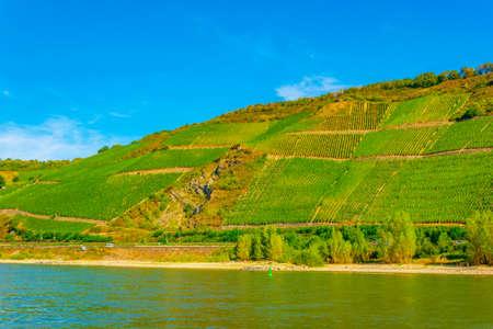 Vineyards near Boppard in Germany