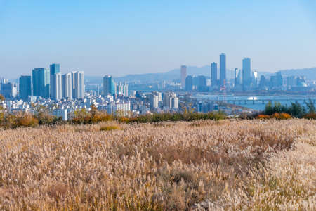 Downtown Seoul viewed behind silver grass at Haneul park, Republic of Korea