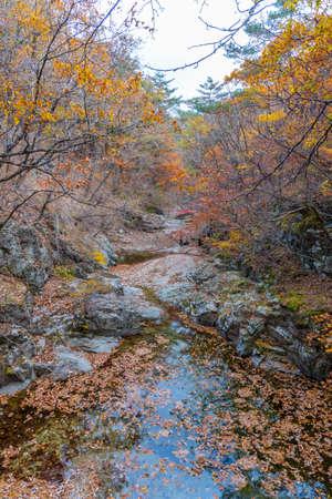 Creek at Juwangsan national park in republic of Korea