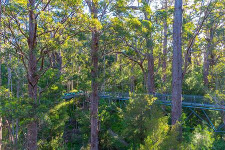 Valley of the giants tree top walk in australia Stok Fotoğraf
