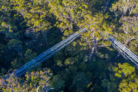 Valley of the giants tree top walk in australia Banco de Imagens