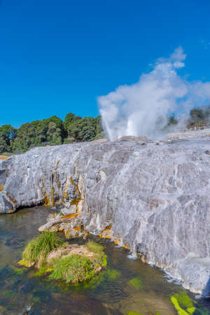 Pohutu geyser at Te puia village near Rotorua, New Zealand
