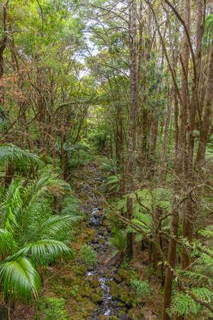 A. H. Reed Memorial Kauri Park at Whangarei, New Zealand