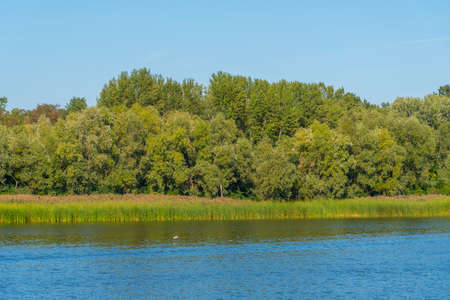Forest at Trukhaniv island in Kiev, Ukraine