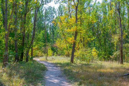 Nature takes over the Ukrainian town Pripyat Zdjęcie Seryjne
