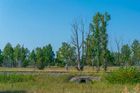 Forest in the Chernobyl exclusion zone in the Ukraine