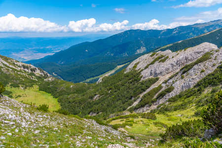 forests spreading on hills of Pirin national park in Bulgaria Stock fotó