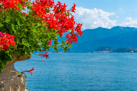 Bellagio viewed behind flowers, Italy Stockfoto