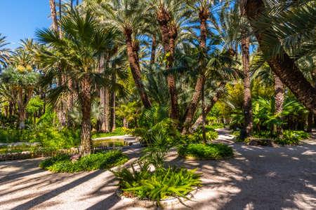 Palm groves at Huerto del Cura garden in Elche Foto de archivo