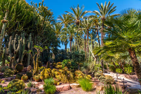 Palm and succulent garden Huerto del Cura in Elche, Spain