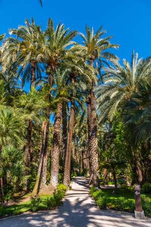 Palm groves at Huerto del Cura garden in Elche