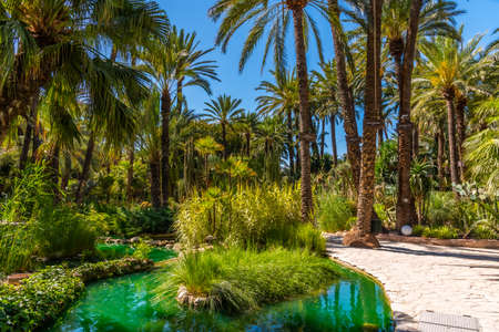 Palm groves reflected on a pond in Huerta del Cura garden in Elche, Spain