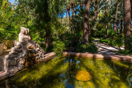 Palm groves reflected on a pond in Huerta del Cura garden in Elche, Spain Foto de archivo