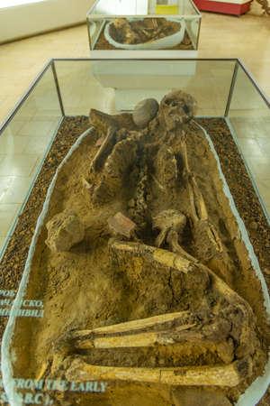 Vratsa, Bulgaria, June 16, 2020: Skeleton inside of the history museum in Vratsa, Bulgaria