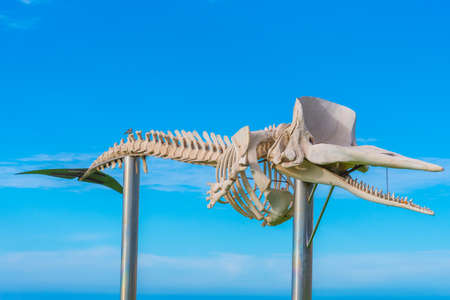 Whale skeleton displayed at Fuerteventura, Canary islands, Spain.