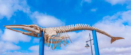 Whale skeleton displayed at Fuerteventura, Canary islands, Spain. Standard-Bild