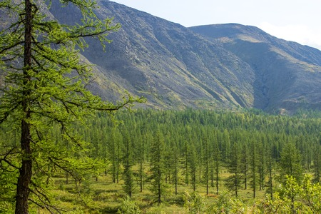 forest glade surrounded by trees and mountains