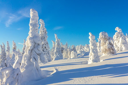 snow-covered trees on mountain slopes on a bright Sunny day Stock Photo