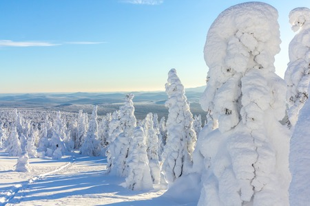 snow-covered trees on mountain slopes on a bright Sunny day 版權商用圖片