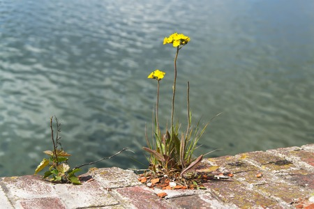 yellow flower has grown on the rock on background of water