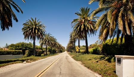 santa barbara: Palm road in Santa Barbara Stock Photo