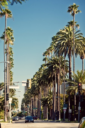 los angeles hollywood: Palm streets of Beverly Hills Stock Photo