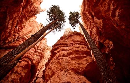 bryce canyon: Bryce Canyon National Park Stock Photo