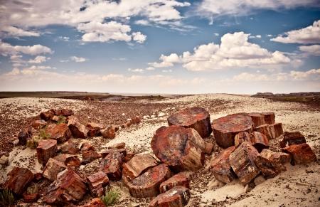 petrified fossil: Petrified Forest National Park, USA Stock Photo