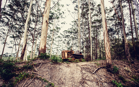 Old rusty tractor in the forest, Australia photo