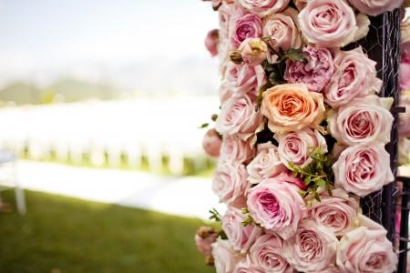 pfingstrosen: Close-up von rosa Rosen und Pfingstrosen Hochzeitsbogen Lizenzfreie Bilder