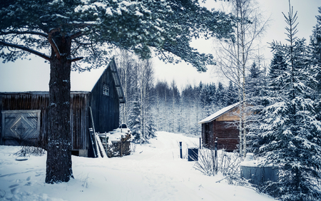 Wooden cottage in winter forest covered by snow in Central Finland photo