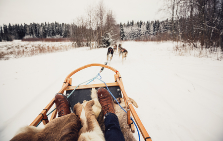 husky: Sled dogs pulling a sled through the winter forest in Central Finland
