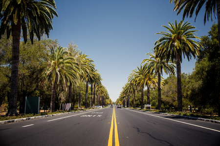 on palm tree: View of palm trees road in California, USA Stock Photo