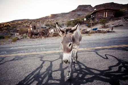 mojave: Donkey in the Mojave Desert, California, USA Stock Photo