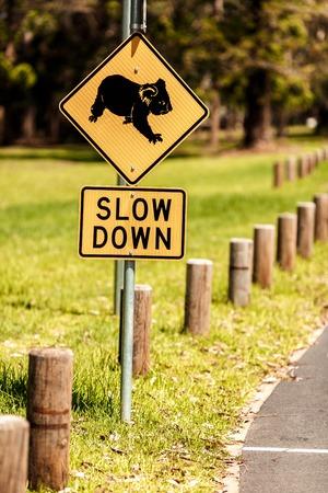 gold coast australia: Roadside sign warning of Koalas being in area Stock Photo