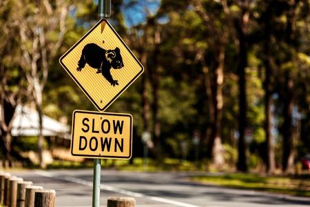 Roadside sign warning of Koalas being in area photo