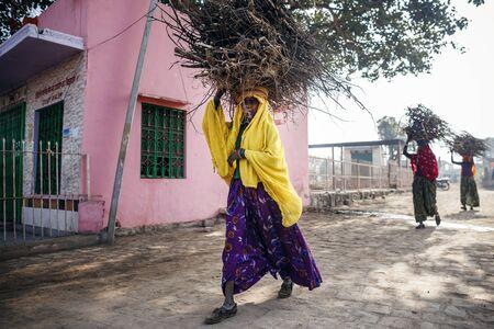 brushwood: RAJASTHAN, INDIA - JANUARY 9, 2015: Indian women carrying brushwood on head on January 9, 2015 in Rajasthan, India