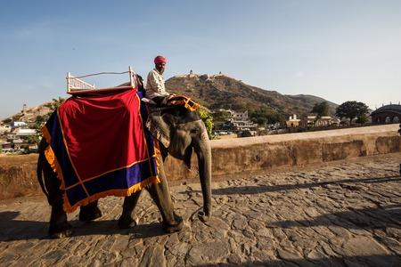 jaipur: JAIPUR, INDIA - JANUARY 10, 2015: Men on elephants near Amer Fort on January 10, 2015 in Jaipur, India