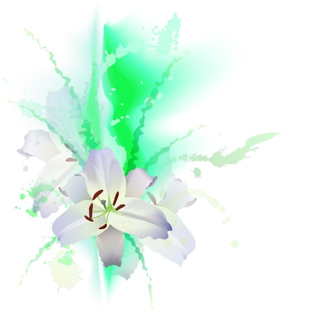 three white Lily and green grass  Vector