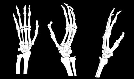 horror face: set of skeleton hands illustration