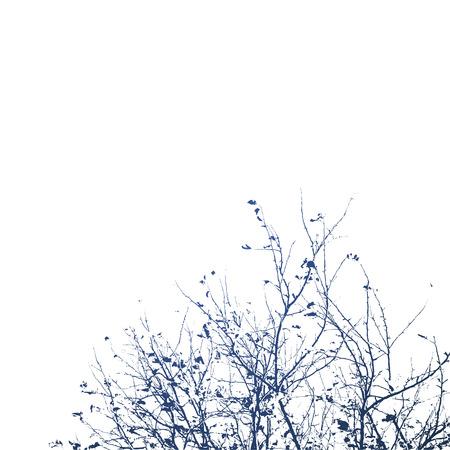 白い背景、イラスト クリップアートの上の木の枝