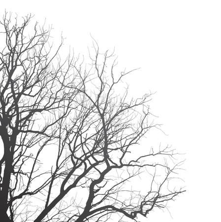 arboles blanco y negro: Ramas de un árbol sobre un fondo blanco, ilustración de clip-art Vectores